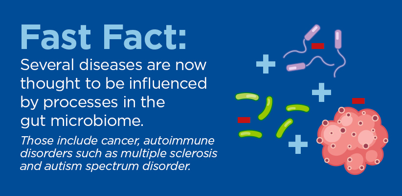 Fast Fact: Several diseases are now thought to be influenced by processes in the gut microbiome. Those include cancer, autoimmune disorders such as multiple sclerosis and autism spectrum disorder.