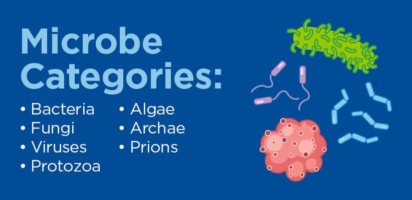 Microbe categories: Bacteria, fungi, viruses, protozoa, algae, archae, prions.