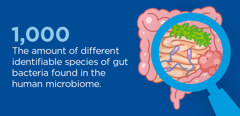 1,000: The amount of different identifiable species of gut bacteria found in the human microbiome.